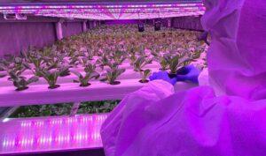 FarmPro-container-farm-interior