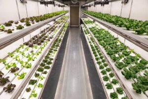 Grow-Pod-container-farm