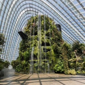 cloud forest - controlled environment agriculture